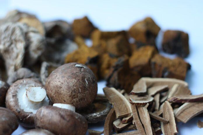 De ce să consumi produse Ganoderma?